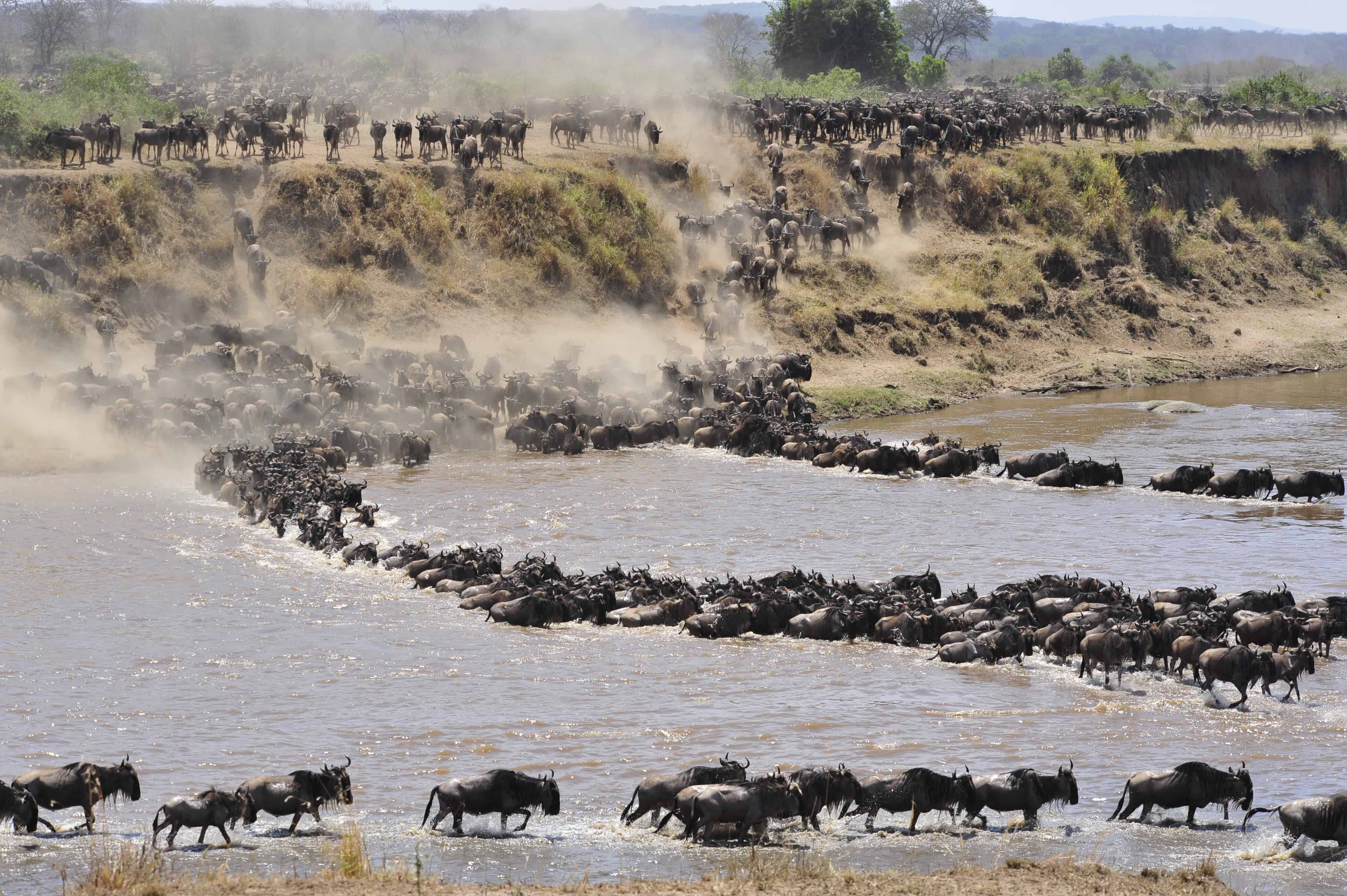 Serengeti Annual Migration