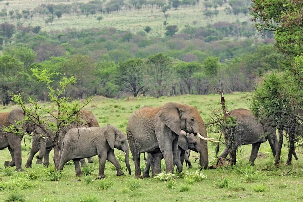 Elephants on Serengeti